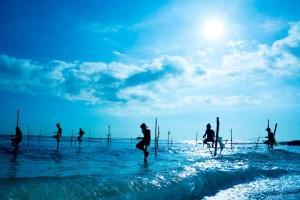 Виды и периоды запретов на рыбную ловлю: