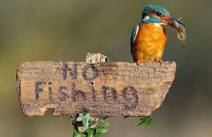 Запрет на рыбалку в России